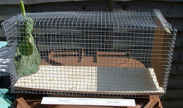 making a rabbit trap instrucatables
