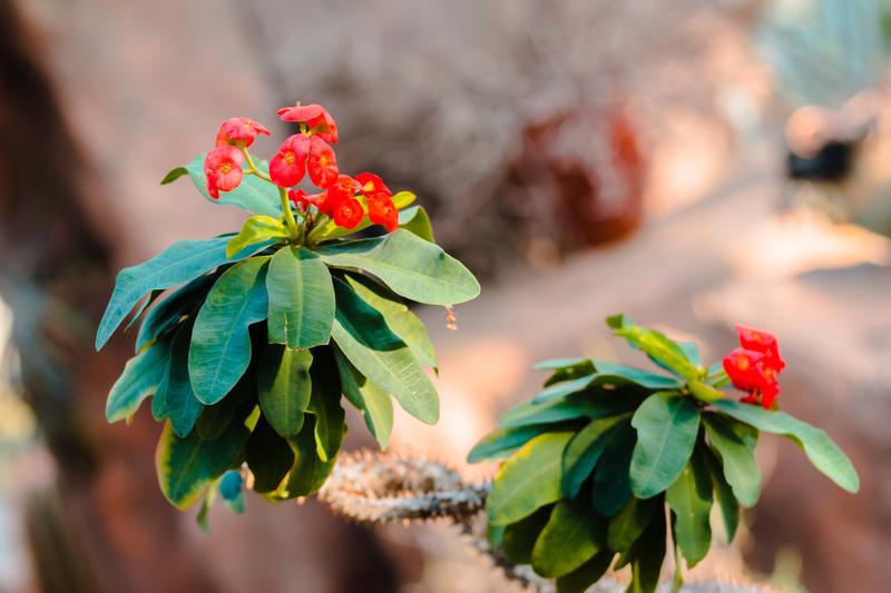 Arid Garden plant