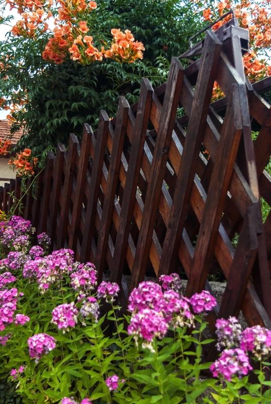amazing flowers bush at summer autumn season beautiful sunny day