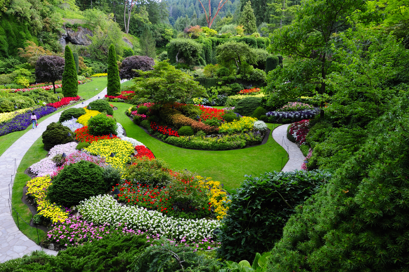 A beautiful garden with amazing flowers and plants
