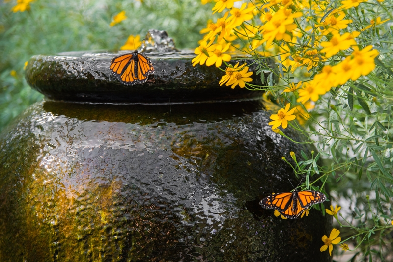 Water feature in the garden with butterfly