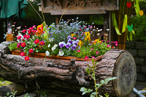 flowers in log plant pot